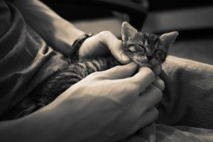 Sleeping in your hand by ideea