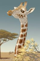 Giraffe by caligis