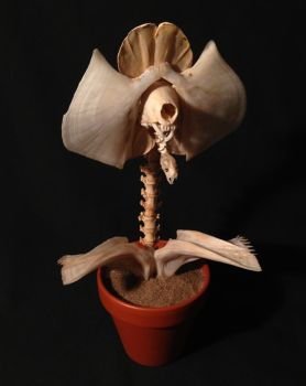 Corpse Orchid by ForgottenBoneyard