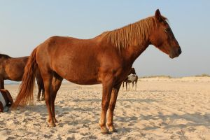 Chestnut Mare I by Stock-Wulf