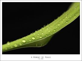 A Moment Of Peace by Mr808