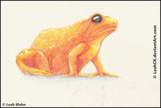 Golden Mantella by LeahCK