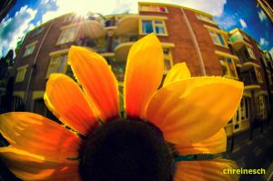 Sunny Amsterwonderland take i by oO-Rein-Oo