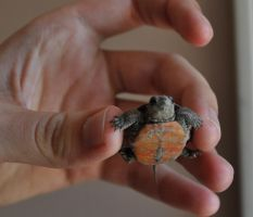 New Pet Turtle by PhotoPsycho