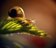 Small Life II by DianaGrigore
