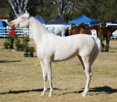 STOCK Canungra Show 2013-4 by fillyrox