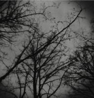 holga_trees by Dronevil
