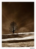 Winter Landscapes 2 by mutrus
