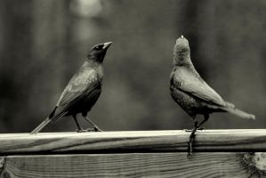 Nothing but Cowbirds by GoGoGodzirra