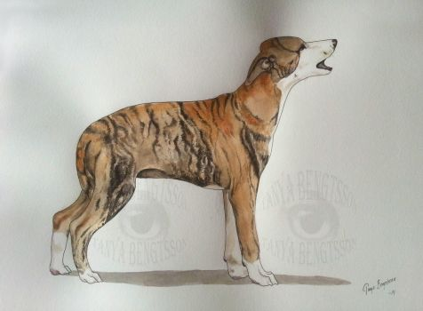 Brindle Whippet Puppy by RaggedVixen