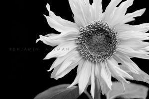 Black and White by BAproductions