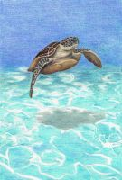 Swimming Turtle by fatboygotsick