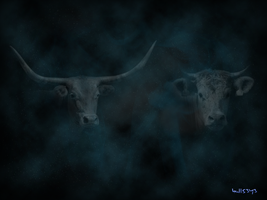 cows in the fog by Bull53Y3