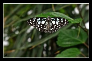 Butterfly 3 by jennystokes