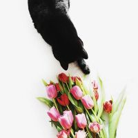 Mortis the cat by odpium