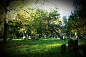 Autumn @ Vienna Central Cemetery #05 by sleepingFrog
