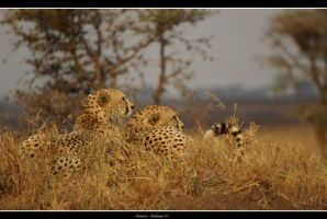 Cheeta's Serengeti by gladiator20