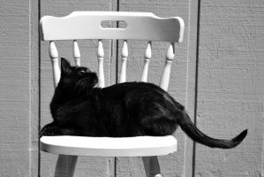Black Cat...White Chair by scream619