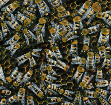 Beez by pachryso