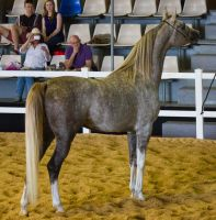 STOCK - 2014 Total Equine Expo-97 by fillyrox