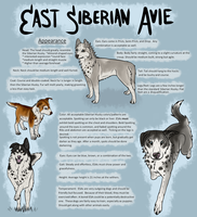East Siberian Avie Breedsheet by galianogangster
