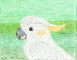 Carlitos the Cockatoo REDONE by Aryncoryn