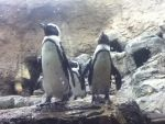 Penguins :D by WeekendRaver
