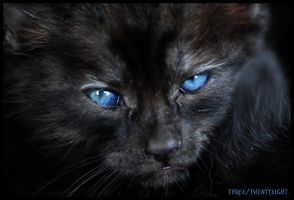 Kitten 1 by Hiver71
