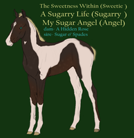 Hollendart foal Design by SweetStreamStables