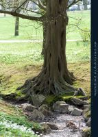 Base03 - Tree by kuschelirmel-stock