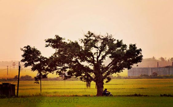 Last Tree by addy-ack