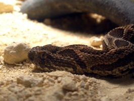 Slither by Amf624