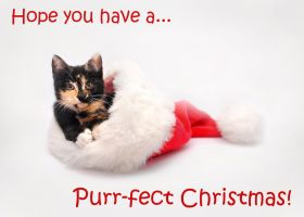 Have a Purr-fect Christmas by TamarViewStudio