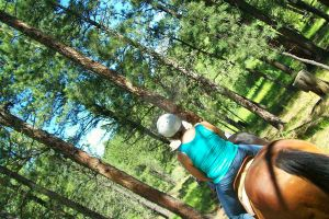 SD Black Hills 16 by HopeGallops
