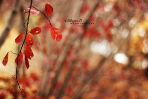 A Red Autumn by Lilliva-Dast
