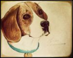 Dog-Beagle by gilly15