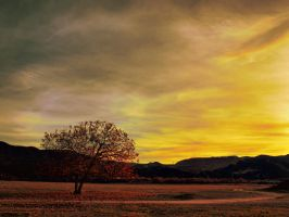 Fall Afternoon by NickKoutoulas