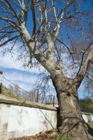 Old tree by eipar