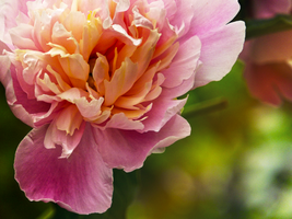 Bloom by TigresSinai