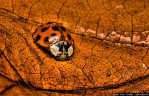 Lady Bug by floggerSG