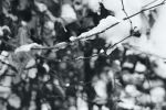 Film - LIV - snow fall by Picture-Bandit