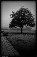 PLWA - Emerge from the fog by andyshade