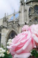 Flower in Front of Notre Dame by repressor