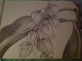 .:: final project for Drawing 1 ::. by renjin-chan