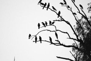 Birds by kr1ssu