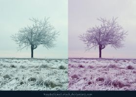 Winter Tree x2 by kuschelirmel-stock