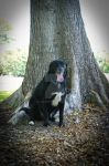 Dog under tree by Dleslie92