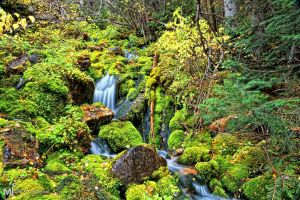 Mossy Filled Waterfall by mjohanson