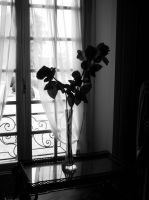 Flower 08 NB by illusiondevivre