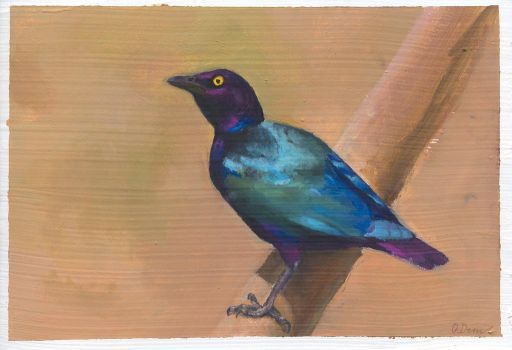 Purple Starling Study by ODemuth